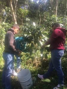 educandos-de-la-uttt-efectuan-primera-cosecha-de-cafe