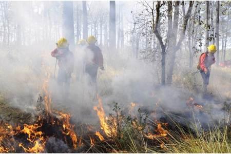 Operativo de Semarnath atiende 15 incendios forestales durante periodo vacacional