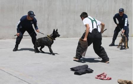 """Policía Estatal y Club Canino convocan a participar en seminario """"Perros de Guardia"""".jpg"""