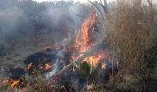 Por lo menos 10 incendios forestales se registran en las últimas 24 horas en Hidalgo5