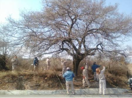 Semarnath realiza limpieza de árboles en la región Tula- Tepeji1.jpg
