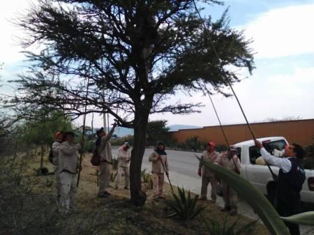 Semarnath realiza limpieza de árboles en la región Tula- Tepeji2.jpg