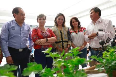 """Arranca alcaldía de Pachuca Taller """"Un Huerto En Tu Casa"""""""