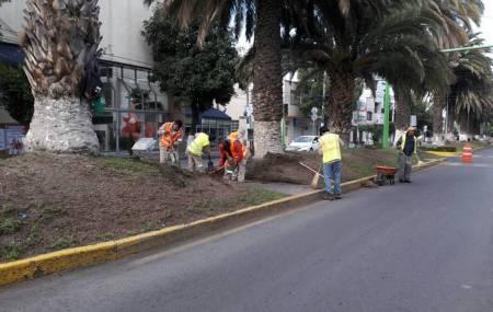 Ayuntamiento de Pachuca realiza trabajos de limpia y poda en avenida Revolución.jpg