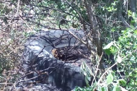 Protección Civil de municipio de San Salvador combate enjambres de abejas