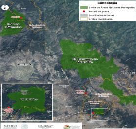 Semarnath realizarán acciones para la conservación del puma en Hidalgo4