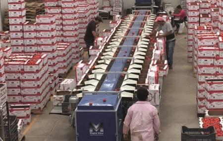 SEDECO apoya y acompaña a MiPymes de Chilcuautla que exportan jitomate a Estados Unidos2.jpg