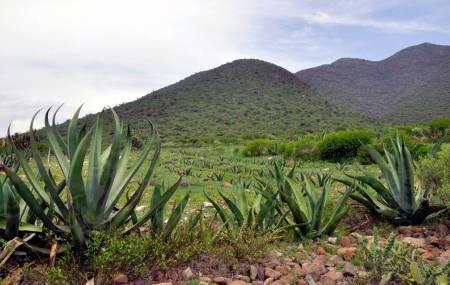 Agricultores reciben capacitación en plantación y uso del maguey.jpg