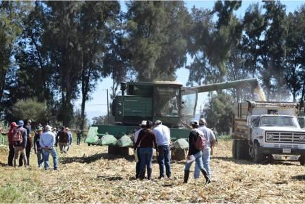 UPFIM logra avances en la cosecha de maíz3