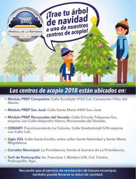 Colecta de árboles de navidad estará vigente hasta el 2 de marzo en Mineral de la Reforma .jpg