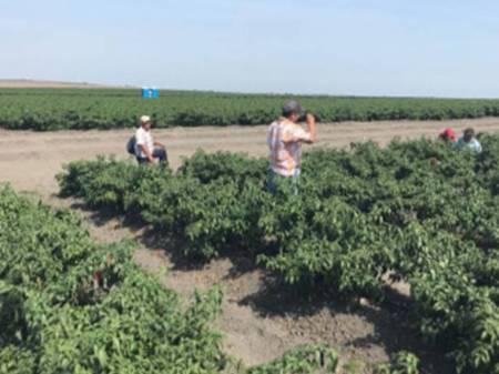Colocan 737 trabajadores agrícolas en campos mexicanos2