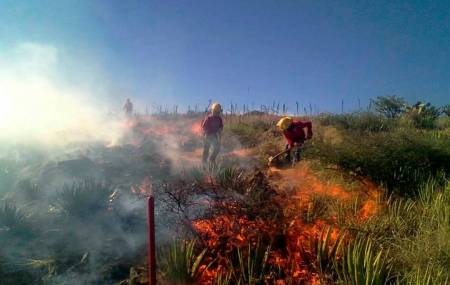 Llama Semarnath a prevenir incendios forestales.jpg
