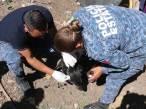 Crean Unidad Canina para atender y garantizar trato digno de los animales; ya hay denuncias2