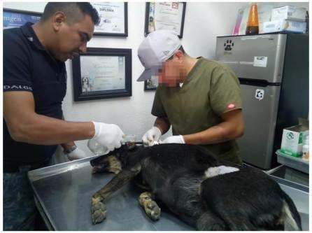 Crean Unidad Canina para atender y garantizar trato digno de los animales; ya hay denuncias4