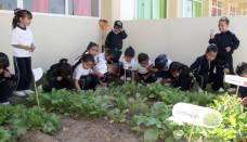 Implementa Jardín de Niños de Tizayuca huertos escolares2