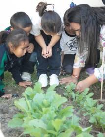 Implementa Jardín de Niños de Tizayuca huertos escolares5