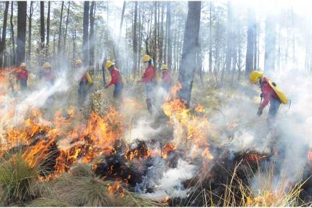 Reconoce Gobierno de Hidalgo labor de combatientes de incendios forestales2