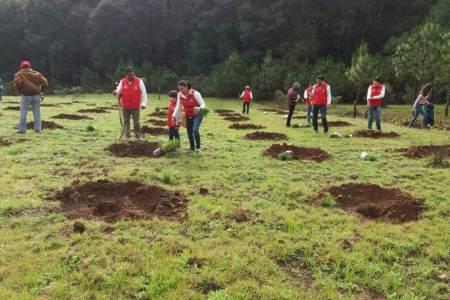 Más de 9, 500 árboles fueron sembrados en diversas comunidades y ejidos de Santiago Tulantepec.jpg