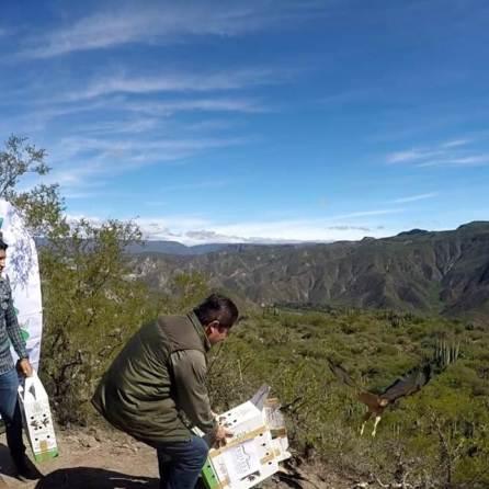 Unidad de rescate de Pachuca libera 3 aguilillas en Reserva de Metztitlán