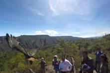Unidad de rescate de Pachuca libera 3 aguilillas en Reserva de Metztitlán2