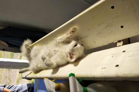 Jornada de esterilización canina y felina en Santiago Tulantepec