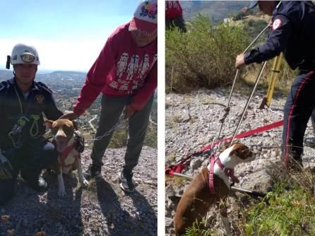 Rescatan Bomberos de Hidalgo a perro que cayó en tiro de mina4