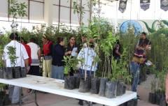 Arranca Mineral de la Reforma, 2da Campaña de árboles frutales a bajo costo2