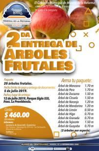 Arranca Mineral de la Reforma, 2da Campaña de árboles frutales a bajo costo3