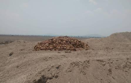 Ayuntamiento de Tolcayuca brinda atención a tiradero clandestino de pollos4