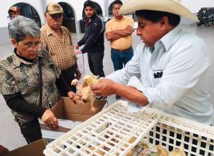 Por tercera vez entregan aves de traspatio en Tolcayuca2