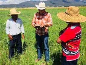 Productores de Tolcayuca son beneficiados con el seguro Agrícola Catastrófico3
