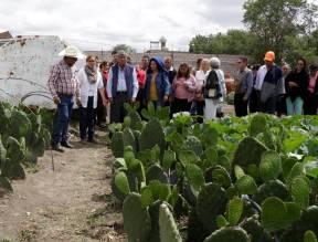 Autoridades municipales y federales fomentan la producción de nopal en Tizayuca2