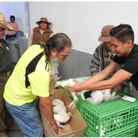 Entregan aves de corral y paquetes de herramientas en Tolcayuca
