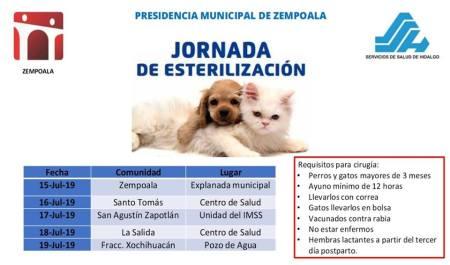jornada de esterilizaciòn de mascotas en Zempoala