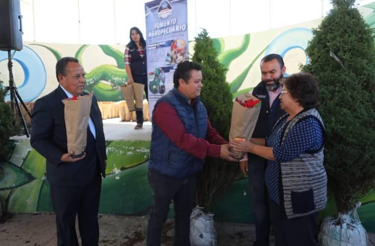 Entrega Mineral de la Reforma más de 360 árboles de navidad a bajo costo4