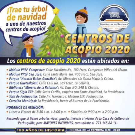 Habilita Mineral de la Reforma, centros de acopio de árboles navideños