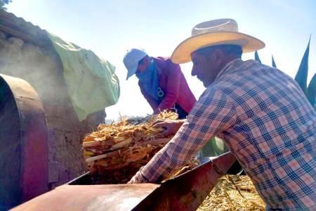 STPSH acerca a jornaleros agricolas trabajos formales