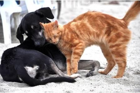 Perros y gatos no transmiten el COVID-19 a humanos, especialista UAEH