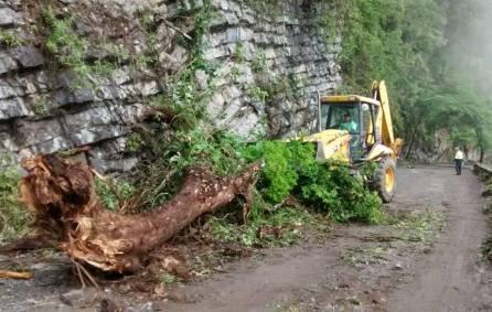 Retiro de árbol caído4
